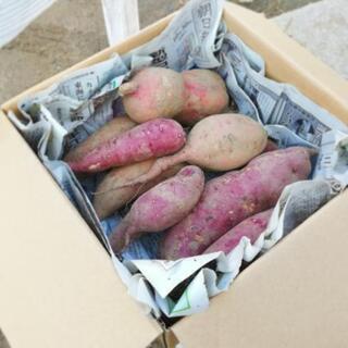 今年収穫したサツマイモ!!3kg