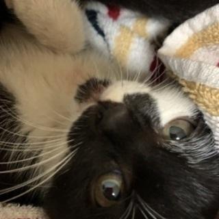 緊急募集 子猫保護