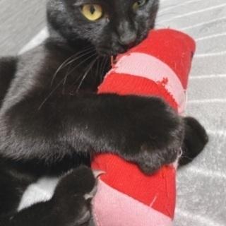 とても人懐っこい黒猫ちゃんです