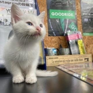 生後二週間程の子猫