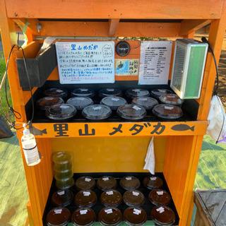 里山めだか メダカとミジンコの無人販売所 11/5
