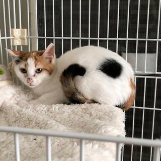 三毛猫の子猫です