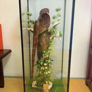 ★高さ100㎝・国鳥・雄の雉(キジ)のはく製・アカヤマドリ…