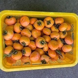引取者決まりました‼️本日取りたて、頂いた柿です。干し柿などに如...