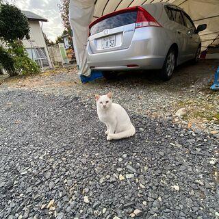 神秘的な瞳オッドアイの白猫です