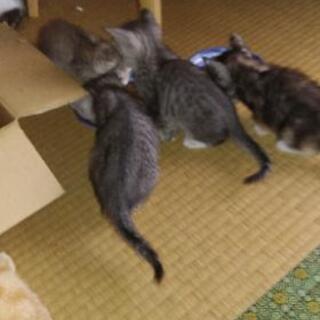 2匹の子猫ちゃん 1か月ちょっとです!とっても可愛いです!