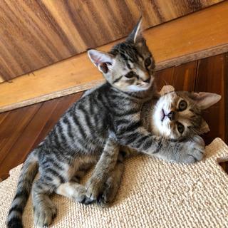 元気な子猫の兄弟❣️