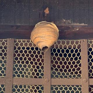 見積もり無料です。蜂の巣駆除ご相談下さい。