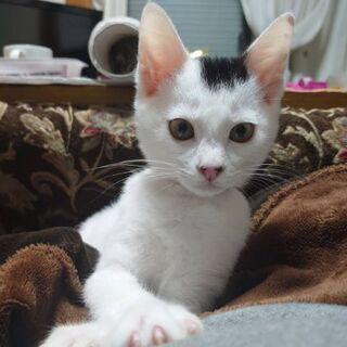 急いでいます。保護猫を迎えよう!!生後3ヶ月♀の画像