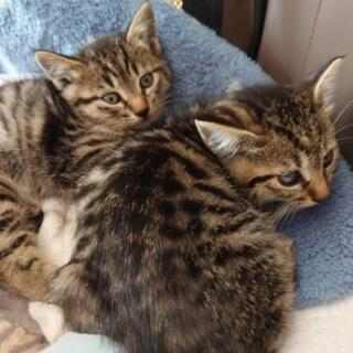 生後約3ヶ月の5匹の兄妹仔猫です。