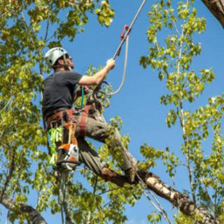 木の上のハチの巣の除去
