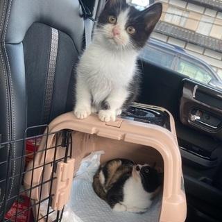 愛鷹山で保護した子猫1.5ヶ月程
