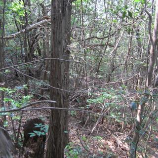 山林 畑 探してます 多久市 唐津市東部