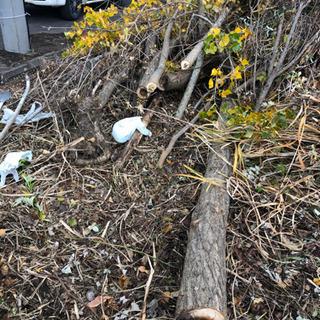 【無料】伐採木 薪 − 北海道
