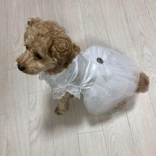 犬服 ウエディングドレス ハンドメイド 1点物 Mサイズ 小型犬...