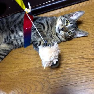 5ヶ月のキジ猫さん 里親様決定!