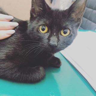 黒猫 5ヶ月の女の子 里親様決定!