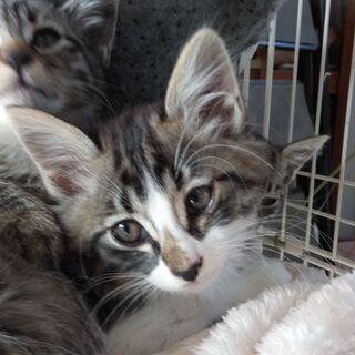 かわいい盛りの子猫4匹、おかげさまでみんな新しい家族に会えました...