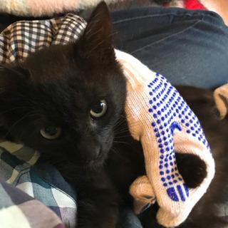 黒猫3兄妹の(女の子)里親さんがが決まりました