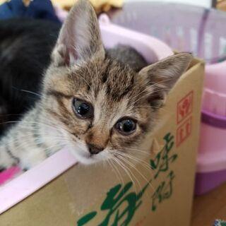 可愛い子猫さんの里親さん募集中です🍀