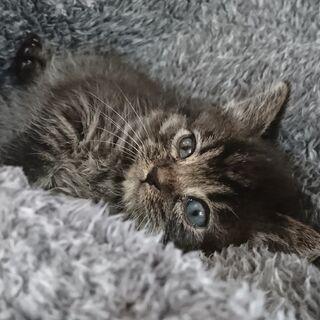 保護した子猫の里親募集