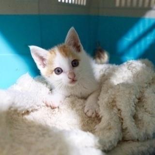 【急募】離島生まれの子猫