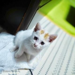 【急募】車に引かれそうになっていた子猫