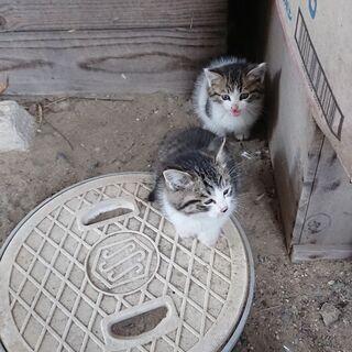 子猫2匹です!