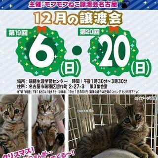 12/20(日) 猫の譲渡会 in 名古屋市瑞穂生涯学習センター