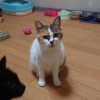 お願いします!母猫と子猫の里親さんになって頂ける方を探しています。