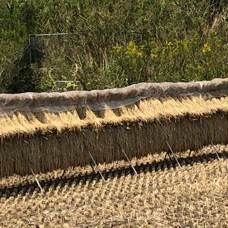 令和2年10月収穫 餅米(籾付)15キロ
