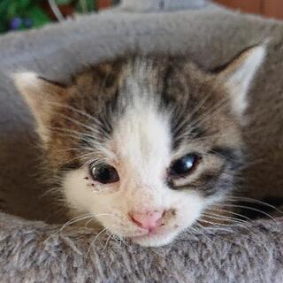 醜いアヒルの子的子猫の里親募集です🥺