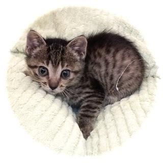 小さな子猫、小くん、元気に成長中。面会予定。