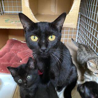 お母さん猫の里親さまを募集します。代理募集です。