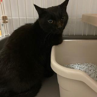可愛い黒猫ちゃんの家族募集です。