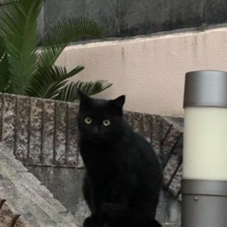 黒猫&白黒ねこの親子