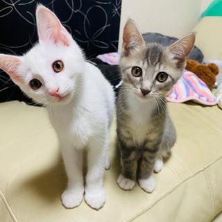 白猫ちゃんの里親募集(=^x^=)急募
