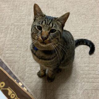 急募!保護猫の里親さん募集してます!