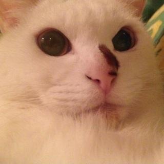 もこもこで甘えたのメス猫ちゃん