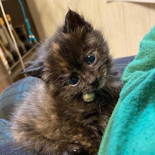 愛嬌があり可愛い仔猫ちゃんです。