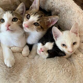 子猫の4兄弟を保護しています