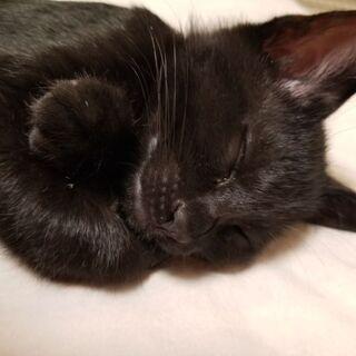 8/21生まれの約4ヵ月です。残り黒猫1匹オスです。4兄弟…