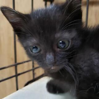 ちまちま黒猫ちゃん - 猫