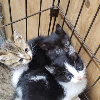 ちまちま黒猫ちゃん - 里親募集