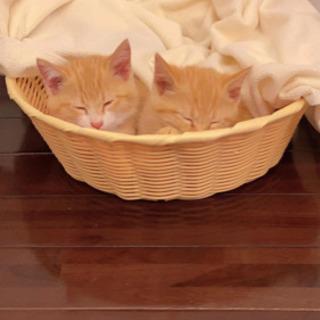 🐱猫🐱好きな方探しいてます。