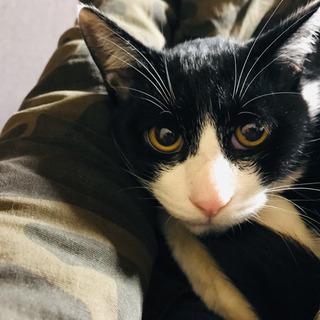 生後半年のオス猫兄弟です。※ほぼ決定済み募集停止します。