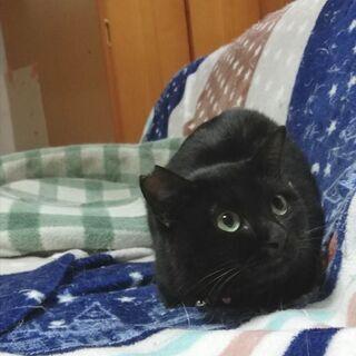 極めつけ懐こい★★黒猫さん