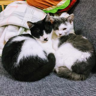 【急募】兄妹の2匹一緒に迎えてくれる方