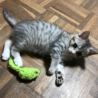 可愛い子猫ちゃん♪里親様のお願いです。
