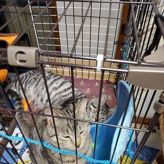 保護猫2匹(避妊手術済み)の里親さん募集